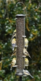 398A Aspects Finch Feeder tall